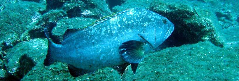 Section plong e subaquatique asptt toulouse for Piscine leo lagrange toulouse
